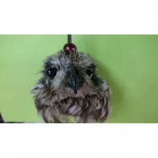 Голова совы.к.к.л.50